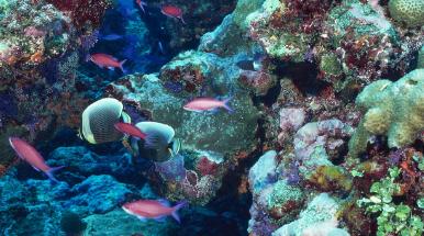 fondale del mare